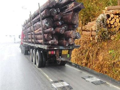 青岛木材运输物流公司